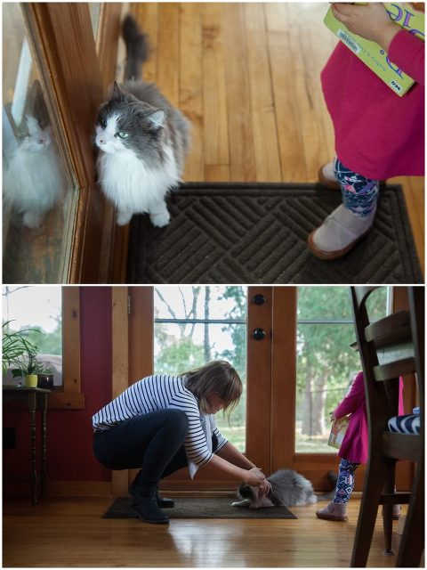 Family cat in family photos